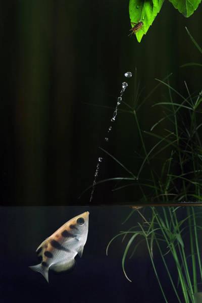 Wall Art - Photograph - Archerfish by Scott  Linstead