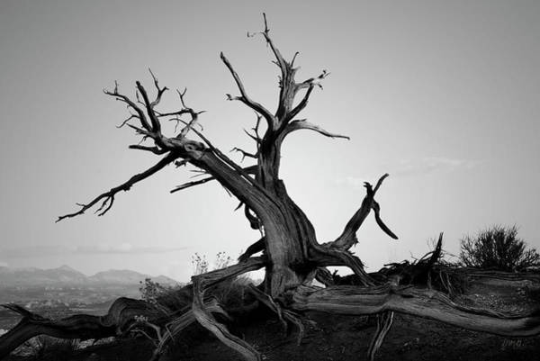 Photograph - Arches Np Xviii Bw by David Gordon