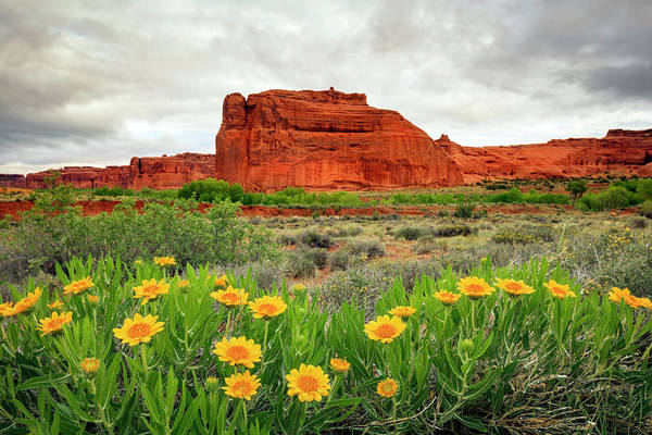 Wall Art - Photograph - Arches Wildflowers by Johnny Adolphson