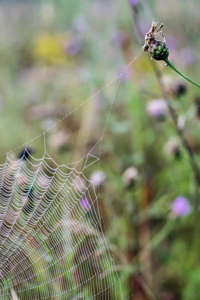 Photograph - Architecture Of A Spiderweb by Christina VanGinkel