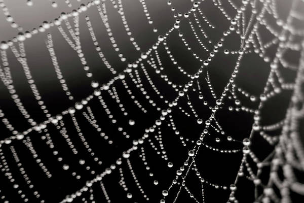 Photograph - Architecture Of A Spiderweb Closeup by Christina VanGinkel