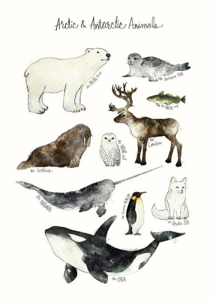 Wall Art - Painting - Arctic And Antarctic Animals by Amy Hamilton