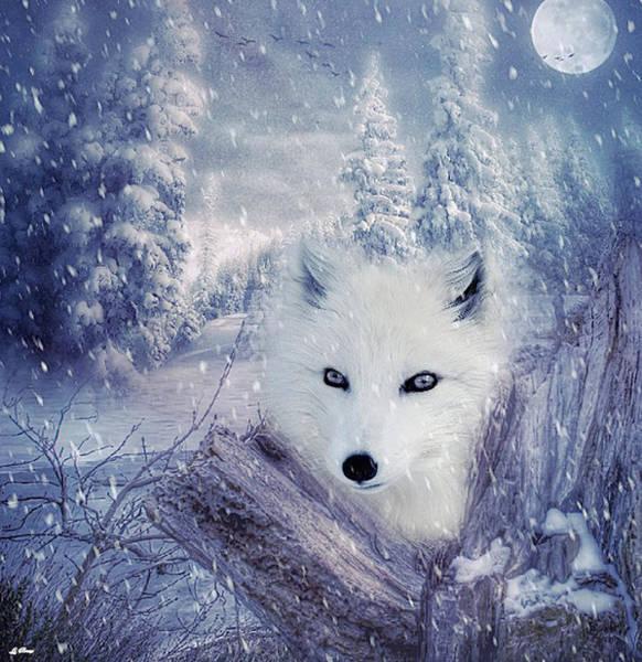 Wild Life Mixed Media - Arctic Fox by G Berry