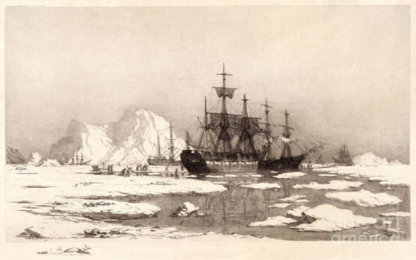 Drawing - Arctic Ocean by Granger