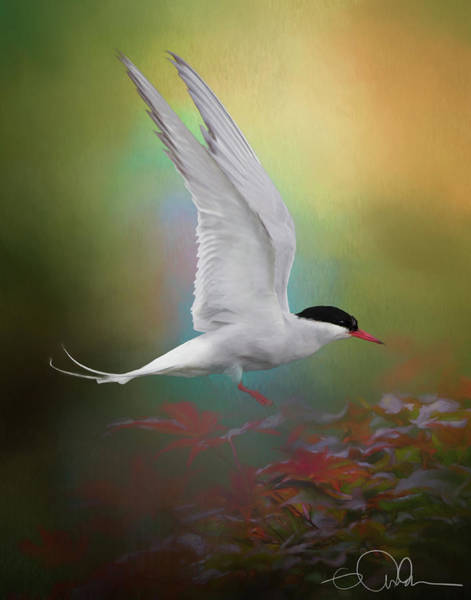 Digital Art - Arctic Tern Landing by Gloria Anderson