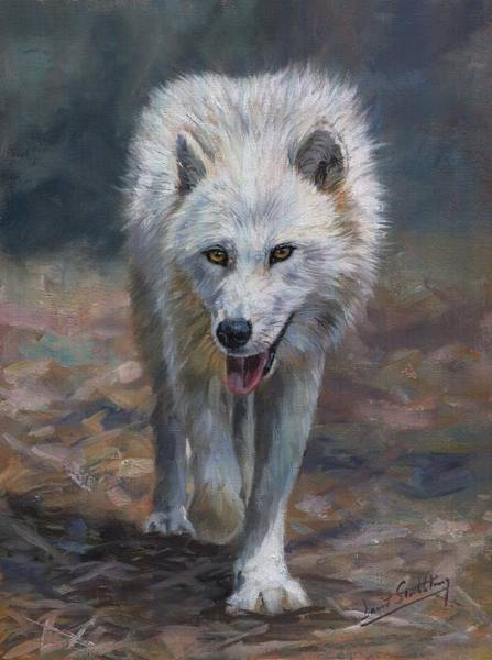 Arctic Wolf Painting - Arctic Wolf by David Stribbling