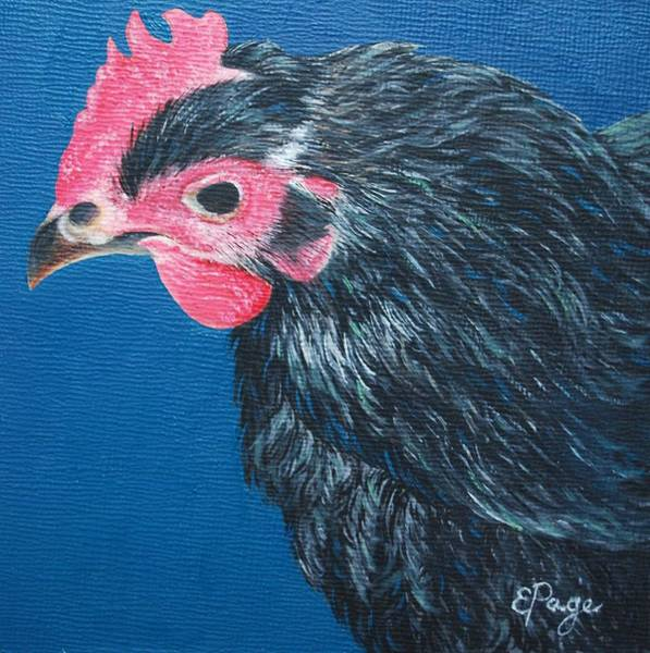 Painting - Aretha, Black Star Chicken by Emily Page