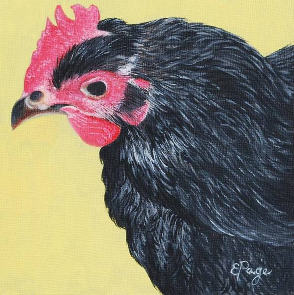 Painting - Aretha, The Black Star Chicken by Emily Page