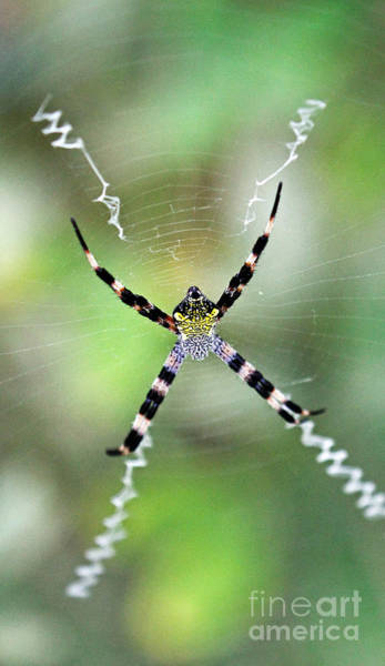 Photograph - Argiope by Jennifer Robin