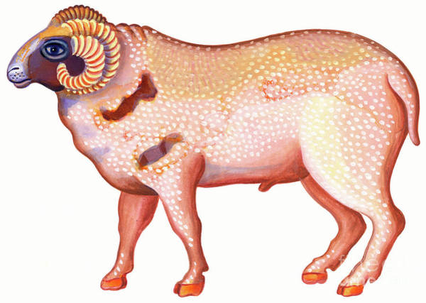 Barnyard Animal Painting - Aries The Ram by Jane Tattersfield