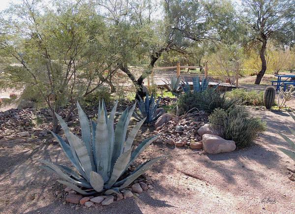 Wall Art - Photograph - Arizona Agaves by Gordon Beck