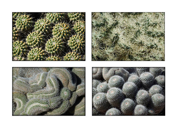 Photograph - Arizona Cacti  by Jill Reger