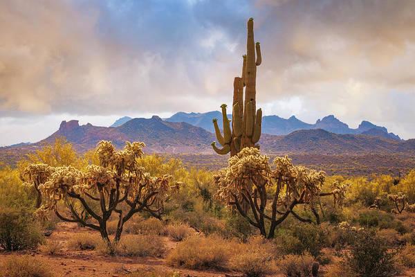 Photograph - Arizona Desert by Giovanni Allievi