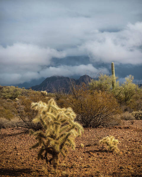 Wall Art - Photograph - Arizona Desert by Joseph Smith