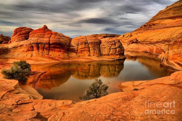 Photograph - Arizona Desert Life by Adam Jewell