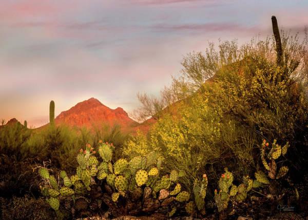 Photograph - Arizona Desert Sunset by Judi Dressler
