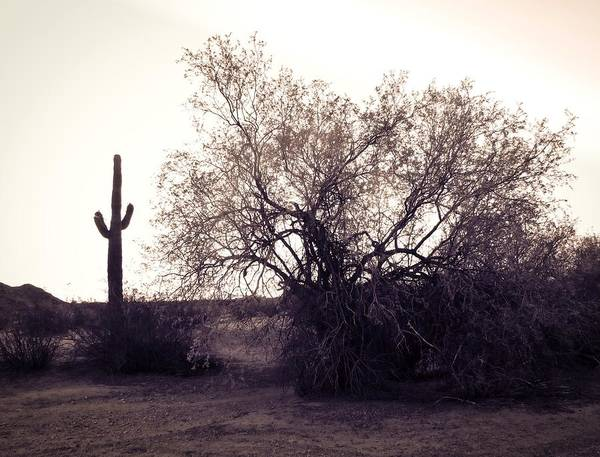 Photograph - Arizona Ironwood Vintage by Judy Kennedy