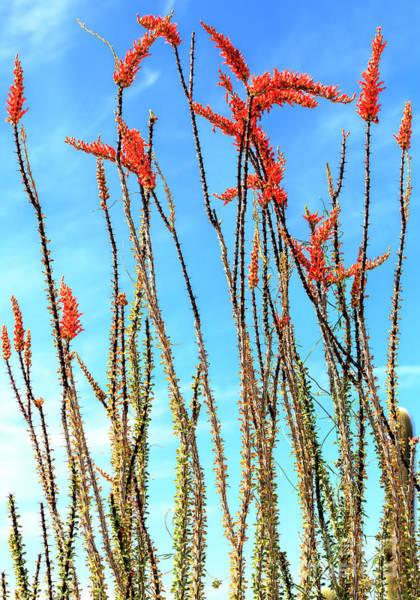 Photograph - Arizona Nature by John Rizzuto