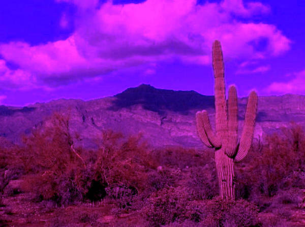 Photograph - Arizona Purple Haze by Judy Kennedy