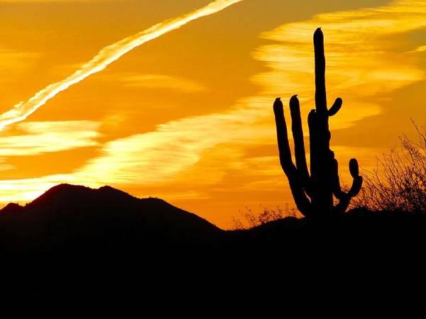 Photograph - Arizona Saguaro Sunset In Orange by Judy Kennedy