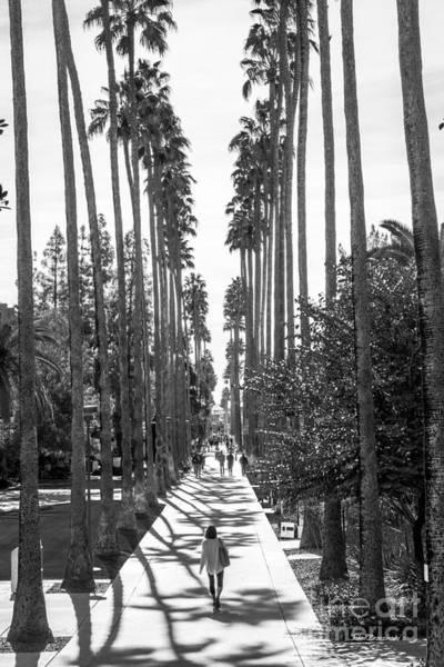 Photograph - Arizona State University Palm Walk by University Icons