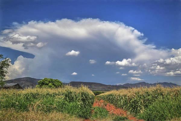 Cornfield Photograph - Arizona Summer by Donna Kennedy