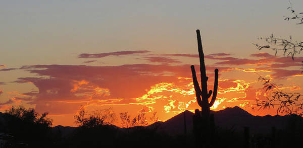 Photograph - Arizona Sunset by Jean Clark