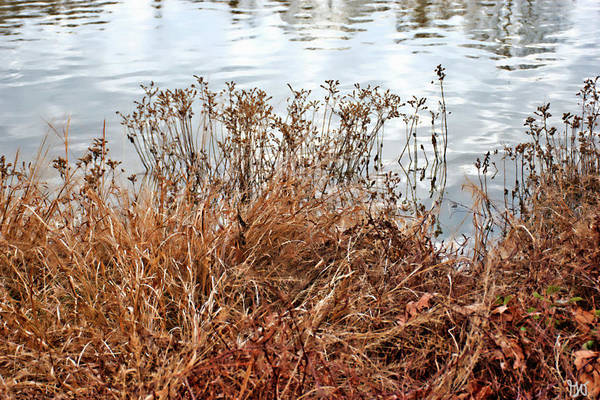 Photograph - Arkansas Pond Shore by Gina O'Brien