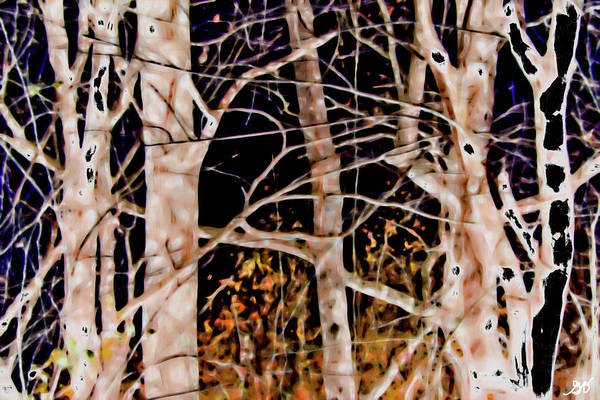 Photograph - Arkansas Winter Trees by Gina O'Brien