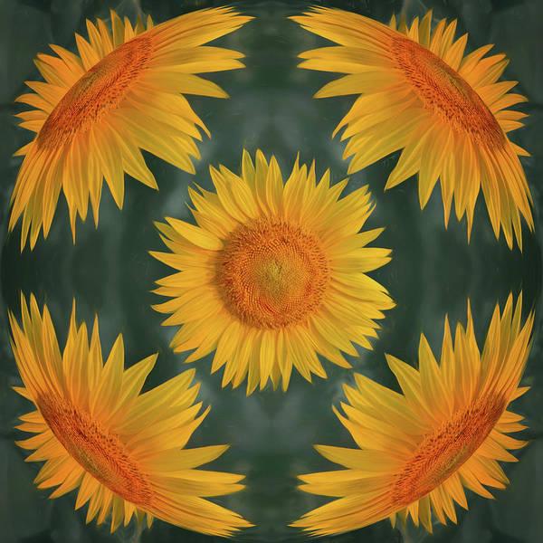 Wall Art - Photograph - Around The Sunflower by Nikolyn McDonald