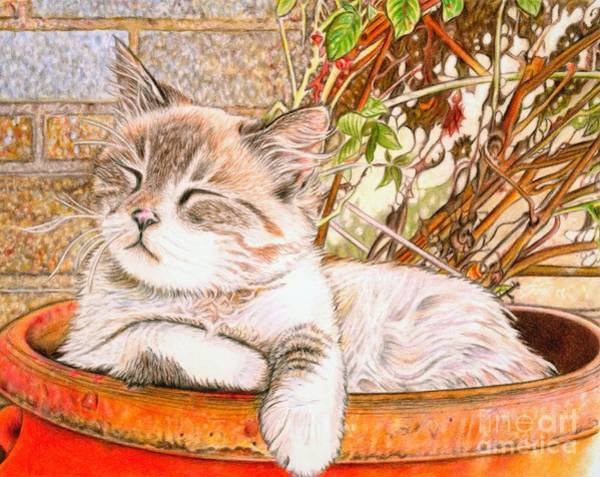 Orange Tabby Drawing - Arrival Of Fall  by Andrea Hayes