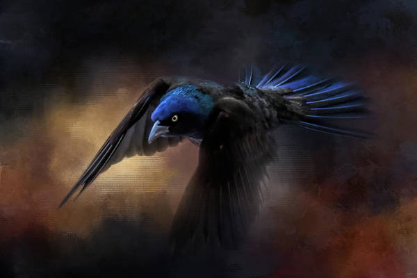 Photograph - Arrival Of The Grackle by Jai Johnson