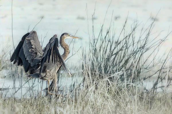 Photograph - Arriving by Belinda Greb