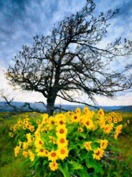 Rowena Photograph - Arrowleaf Balsam And Oak In Early Morning by Adele Buttolph