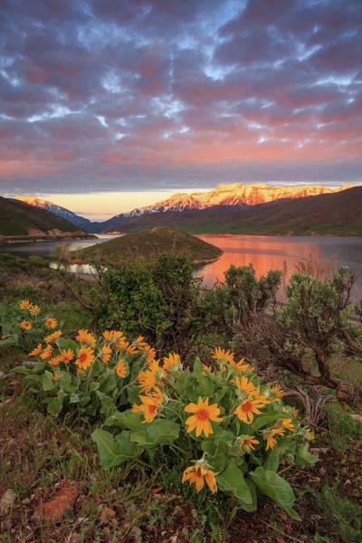 Heber Springs Photograph - Arrowleaf Balsomroot Wildflowers Above Deer Creek. by Johnny Adolphson