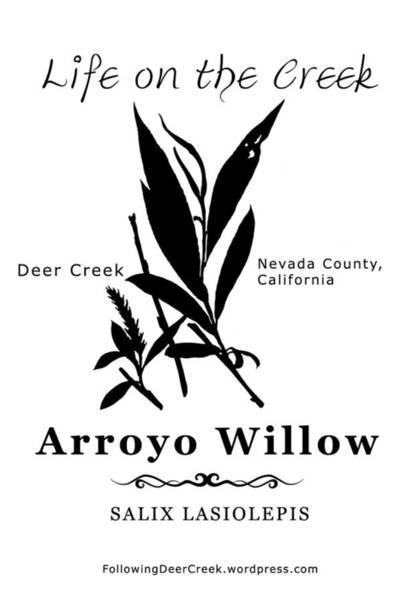 Digital Art - Arroyo Willow - Black Text by Lisa Redfern