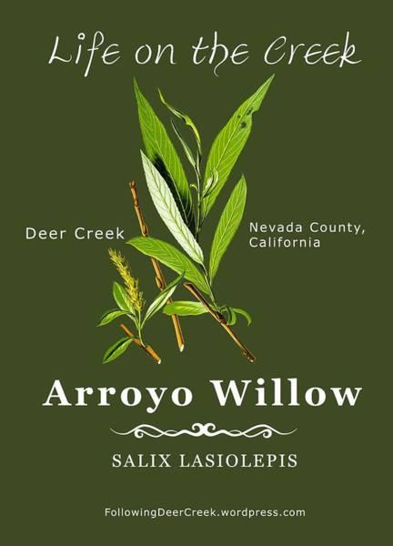Digital Art - Arroyo Willow - Color by Lisa Redfern