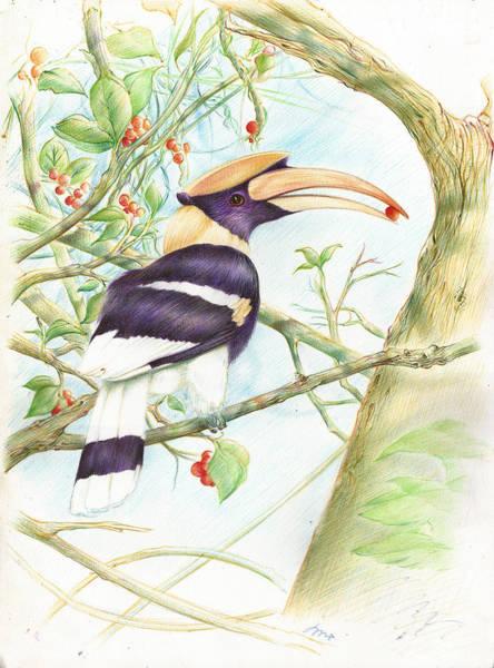 Hornbill Drawing - hornbill Pen drawing by Songwut Thason