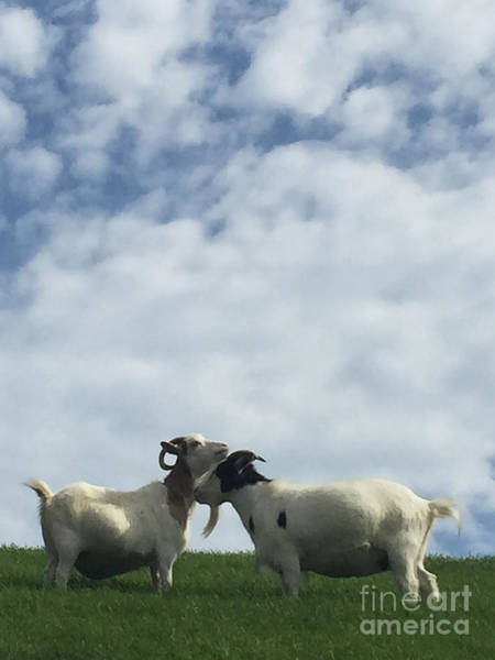 Wall Art - Photograph - Art Goats II by Margie Hurwich