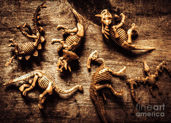 Artifacts Wall Art - Photograph - Art In Palaeontology by Jorgo Photography - Wall Art Gallery