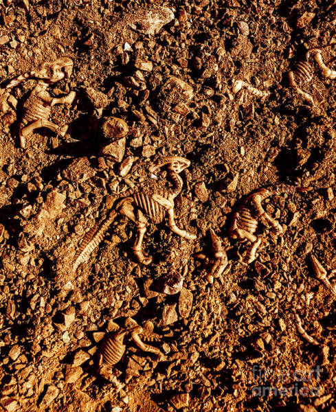 Bone Photograph - Art Of A Dinosaur Dig by Jorgo Photography - Wall Art Gallery