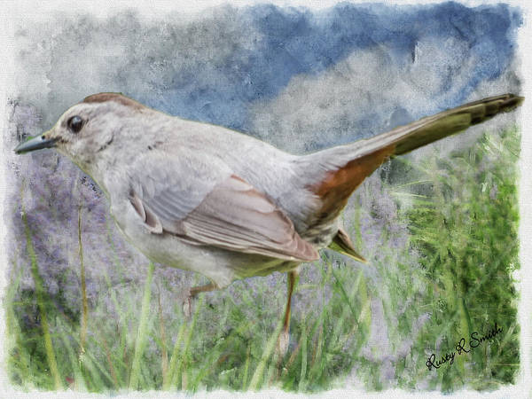 Digital Art - Art Photo Of Gray Cat Bird. by Rusty R Smith
