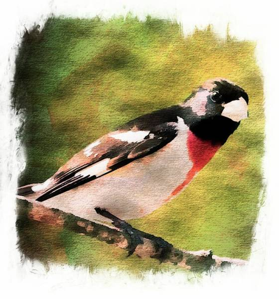 Photograph -   Red Breasted Grosbeak. by Rusty R Smith