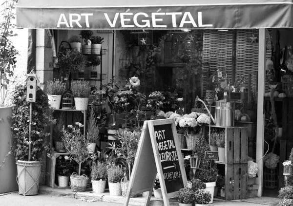 Photograph - Art Vegetal - Beaune, France by Jani Freimann