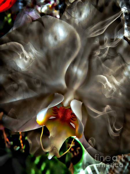 Photograph - Artful Orchid by Jolanta Anna Karolska