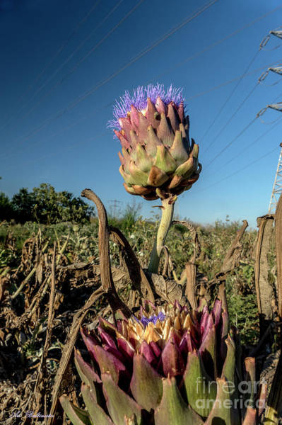 Photograph - Artichoke, 02 by Arik Baltinester