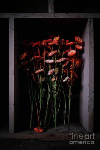 Wall Art - Photograph - Artificially Colored Orange by Masako Metz