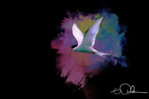Digital Art - Artistic Arctic Tern by Gloria Anderson