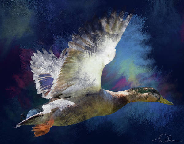Photograph - Artistic Duck In Flight by Gloria Anderson