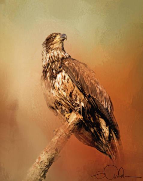 Digital Art - Artistic Eagle On A Branch by Gloria Anderson